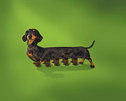 Fun Digital Art - Centipedian Daschund by Kitty Bitty