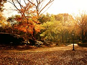 Landscapes Photo Prints - Central Park Autumn Trees in Sunlight Print by Vivienne Gucwa
