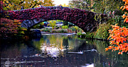 Gapstow Bridge Framed Prints - Central Park Bridge in Autumn Framed Print by Allan Einhorn