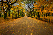 Central Park Photos - Central Park in Autumn by David Hahn