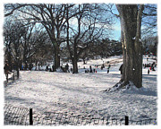 Crooked Fence Framed Prints - Central Park in Winter 5 Framed Print by Muriel Levison Goodwin