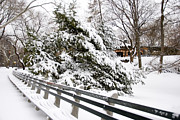 Broker Photos - Central Park in Winter by Louis Scotti