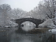 Marcello Martinho Framed Prints - Central Park Ny Framed Print by Marcello Martinho
