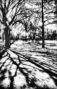 Nyc Mixed Media - Central Park Trees and Shadows by Vizual Studio