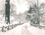 Snow Covered Trees Posters - Central Park Winter Landscape Poster by Vivienne Gucwa