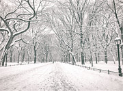 Winter Trees Metal Prints - Central Park Winter - Poets Walk in the Snow - New York City Metal Print by Vivienne Gucwa
