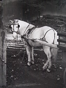 Horse And Cart Photo Metal Prints - Central Park Worker Metal Print by Nancy Kane Chapman