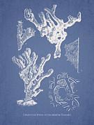 Ceratodictyon Spongiosum Zanard Print by Aged Pixel