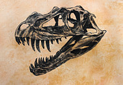 Dinosaurs Originals - Ceratosaurus skull by Harm  Plat