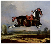 Horse Jumping Paintings - Cerbero by Johann Georg von Hamilton