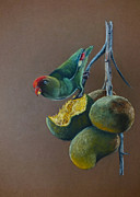 Fruit Tree Art Print Framed Prints - Ceylon Hanging Parrot Framed Print by Nirosh Perera