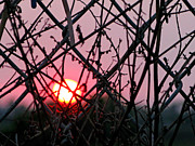 Fushia Framed Prints - Chain Link Sunset Framed Print by Jennie Breeze