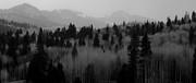 Atom Crawford - Chama trees