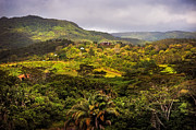 Lush Vegetation Prints - Chamarel. Mauritius Print by Jenny Rainbow