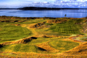Golf Courses Prints - Chambers Bay Lone Tree Print by David Patterson