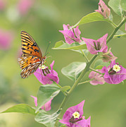 Gulf Fritillary Photos - Chance Encounter by Kim Hojnacki