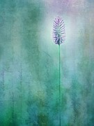 Grasses Prints - Chandelle Print by Priska Wettstein