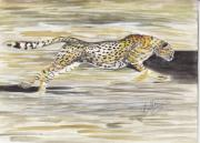 Cheetah Running Prints - Changing Gears Print by Callie Smith