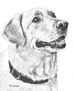Closeup Drawings Prints - Charcoal Drawing Yellow Lab in Profile Print by Kate Sumners