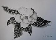 Paula Peltier - Charcoal Magnolia I