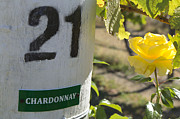Loriannah Hespe - Chardonnay 21 and Yellow...