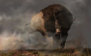 Western Themed Posters - Charging Bison Poster by Daniel Eskridge