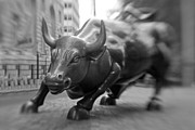 Finance Photo Framed Prints - Charging Bull 1 Framed Print by Tony Cordoza