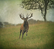 Roy Mcpeak Prints - Charging Stag Print by Roy McPeak