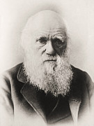 Beards Photo Framed Prints - Charles Darwin Framed Print by English School