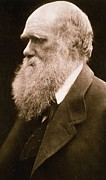 Beards Photo Framed Prints - Charles Darwin Framed Print by Julia Margaret Cameron