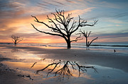 Management Posters - Charleston Botany Bay Boneyard Beach Tree in Surf Poster by Mark VanDyke