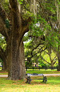 Live Art Photo Prints - Charleston Live Oaks and Garden Bench Print by Stephanie McDowell