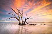 Water Flowing Posters - Charleston SC Sunset Folly Beach Trees - The Calm Poster by Dave Allen