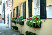 Charleston Houses Prints - Charleston South Carolina - Rainbow Row - Window Boxes Print by Kathy Fornal