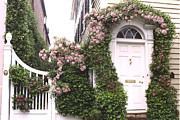 Climbing Roses Posters - Charleston South Carolina Roses Arbor and Door Poster by Kathy Fornal