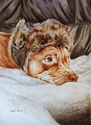 Staffie Paintings - Charlie the Cheeky Chappy by Pet Portraits by Julie Bunt