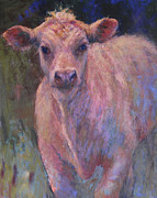 Susan Williamson - Charlois Calf