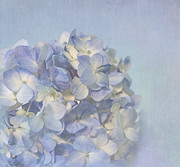 Blue Flowers Photos - Charming Blue by Kim Hojnacki