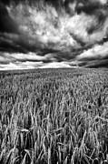 Chasing The Storm Print by John Farnan