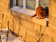 Winter Roads Photos - Checking The Window For ice by Tina M Wenger