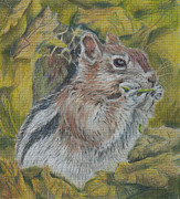 Lively Drawings - Cheeky Chipmunk by Liz  Lamb