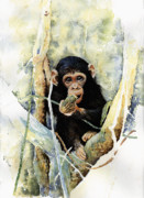 Chimpanzee Art - Cheeky by Roger Bonnick