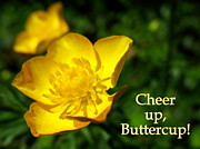 Cheer On Photo Posters - Cheer Up Buttercup Poster by Patti Whitten