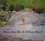 Rocky Mountain National Park Posters Posters - Cheerful Chipmunk Poster by Laura Bentley