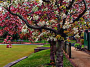 Park Benches Digital Art - Cheery Blossoms Of Springtime by Wobblymol Davis