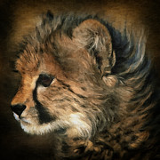 Cheetah Digital Art - Cheetah 14 by Ingrid Smith-Johnsen