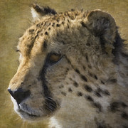 Cheetah Digital Art - Cheetah 21 by Ingrid Smith-Johnsen