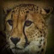Cheetah Digital Art - Cheetah 3 by Ingrid Smith-Johnsen