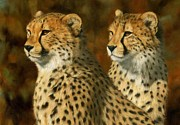 Lion Oil Paintings - Cheetah Brothers by David Stribbling