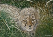 Tom Blodgett Jr - Cheetah Cub